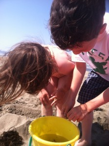 The kids collected jellyfish at Ocean Beach over the weekend. I couldn't go.
