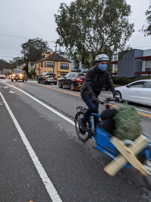 Man carrying Christmas tree on a bicycle